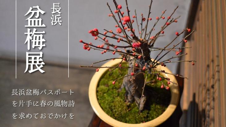 長浜盆梅展が凄い!慶雲館で過ごす優雅なひとときを。盆梅パスポートのおトク情報も【駐車場情報あり】